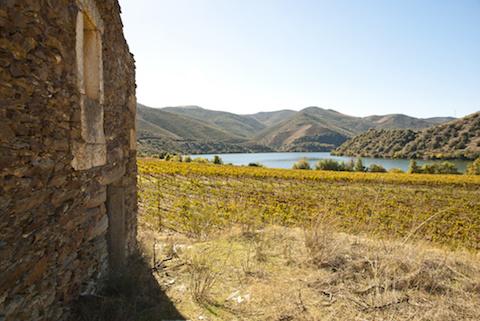 Portwein Anbauregion